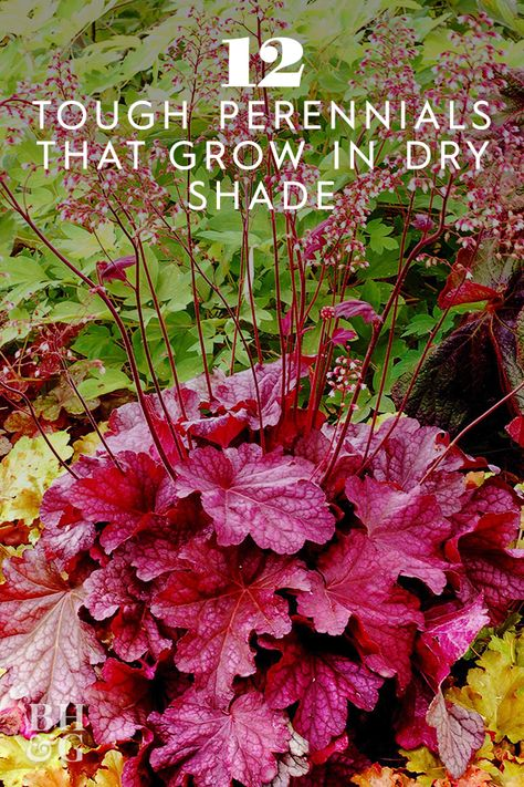 This perennial grows flowers, but coralbells' foliage is what really stands out. Varieties like 'Marvelous Marble' grow beautiful, multicolored leaves with a marble-looking surface. #gardening #gardenideas #perennials #lowmaintenanceperennials #bhg
