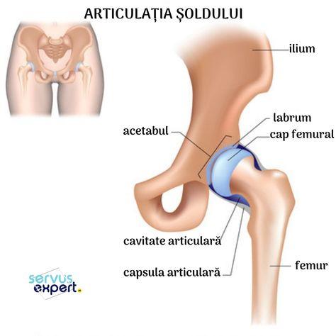 capsule negre de furnică pentru durerile articulare dureri mari de bilirubină și articulație
