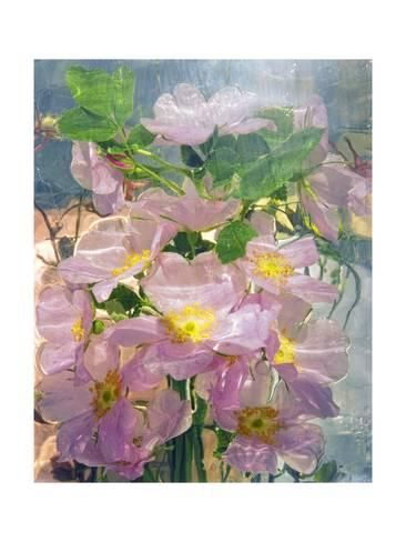Giclee Print Flowers By Andrzej Pluta 24x18in Art Flower Painting Fine Art