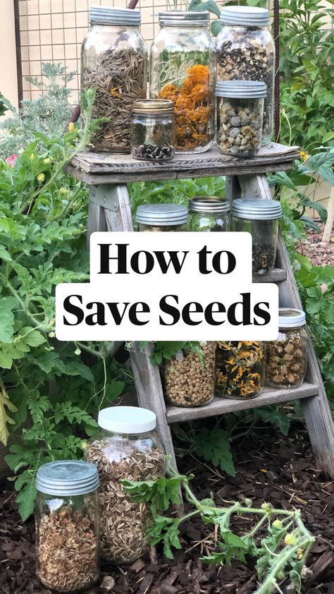 How to  Save Seeds