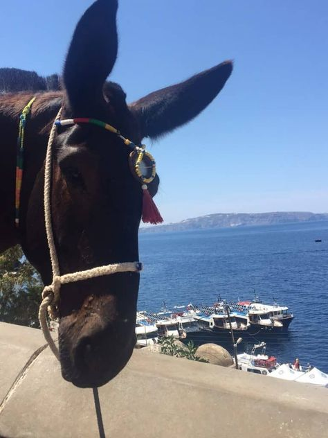 Not Another Santorini Post: 15 Santorini Greece Realities that No One Tells you about in the Travel