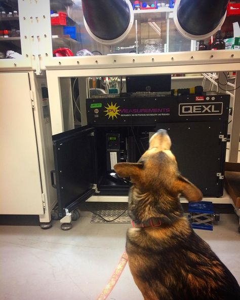 rescuedog Helping Mom test solar cells...