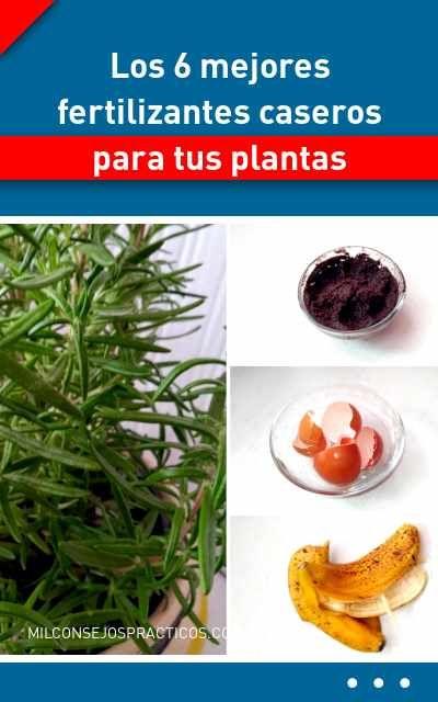 Los 6 Mejores Fertilizantes Caseros Para Tus Plantas Inside Plants Plants Compost