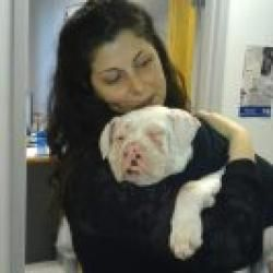Pudge is an #adoptable American #Bulldog Dog in #Newtown, #PENNSYLVANIA. Pudge is an #adorable #AB #pup, approx 4-5 months old. Although Pudge is completely #deaf and mostly #blind, this doesn't stop her!!! She loves to...