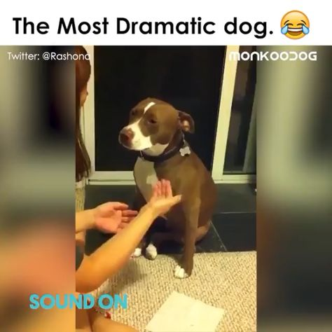 ☆😂🤣And the Oscar goes to 🐶
