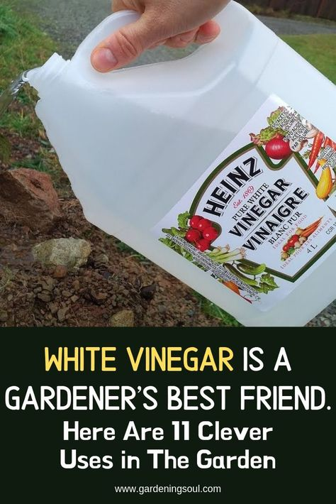 White Vinegar Is A Gardener's Best Friend. Here Are 11 Clever Uses in The Garden