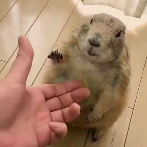 Give squirrel your hand! |  Fearful Dogs  | My Dog Is Scared Of Everything | #instadog #petsit