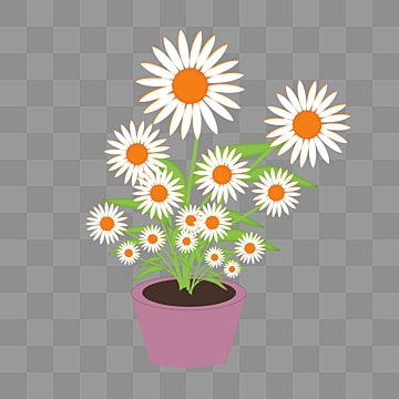Download Simple Daisy Flower Daisy Flower Flower White Flower Png Transparent Image And Clipart For Free Download In 2021 White Flower Png Flower Png Images Daisy Flower