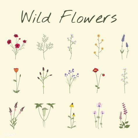 Illustrated Wild Flowers Free Image By Rawpixel Com Flower Drawing Design Flower Drawing Flower Illustration