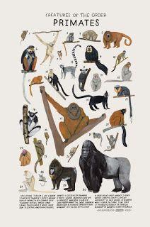 Biología Con Sam Características De La Clase Mamíferos Carteles De Animales Ilustraciones De Animales Ilustración Animal