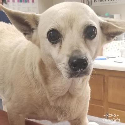 Kenedy Tx Dachshund Meet Waffles A Dog For Adoption Dachshund Adoption Dachshund Mix Pet Adoption