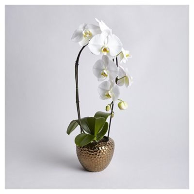Cascading White Phalaenopsis Orchid From Tesco Phalaenopsis Orchid Orchids Phalaenopsis