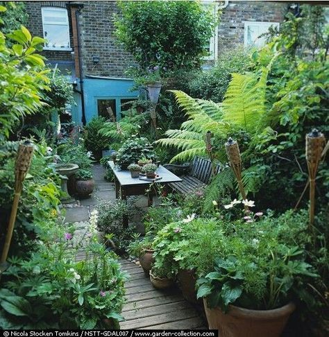 Image Result For Small Jungle Garden Ideas Small Garden Design Garden Spaces Jungle Gardens