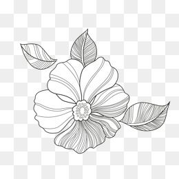 Flower Line Png Images Vector And Psd Files Free Download On Pngtree Leaf Art Flowers Flower Clipart