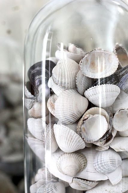 an idea for displaying some of the 100s of shells the kids have collected on norfolk's beaches this week;-)