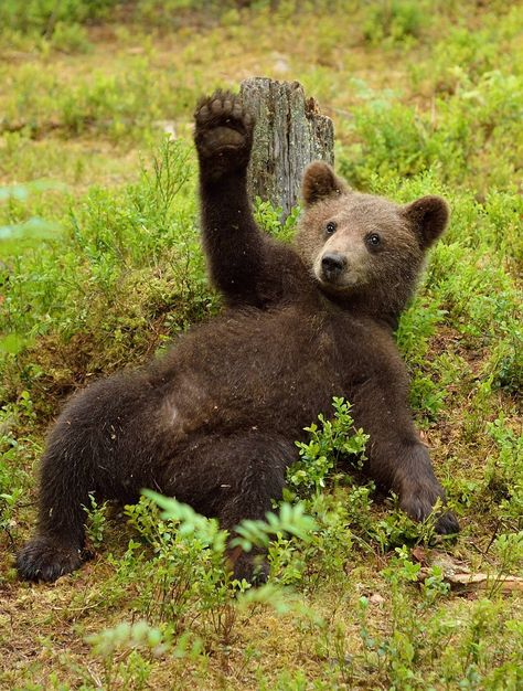 The right to bear arms!