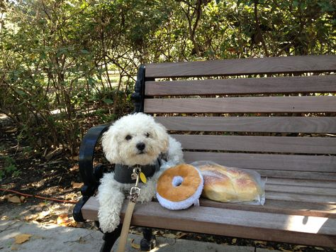 A Stuffed Bagel And A Fresh Challah Life Is Good Shalom Y All