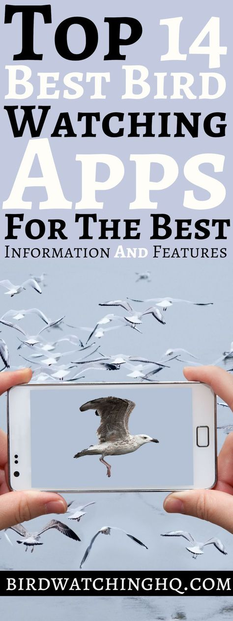 The 13 Best Bird Watching Apps (2021)