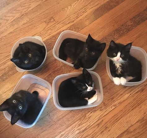 they have each chosen their favorite bowls