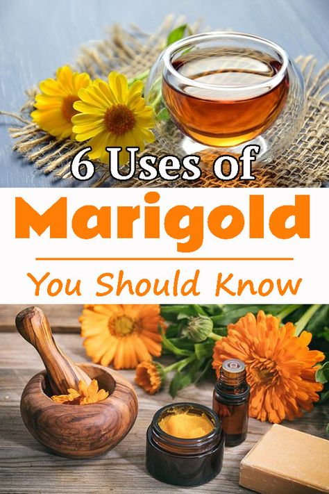 Incredibly popular and beautiful! Know what are the possible uses of marigold flowers and what all is has to offer to you.