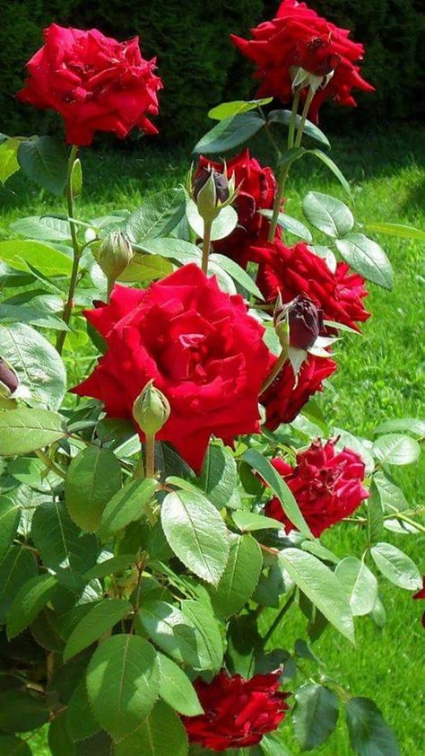 Photo #gardeningideas