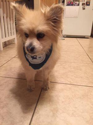 Adopt Buddy 2 On Petfinder Pet Adoption Dog Adoption Pets