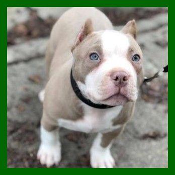 Pin Auf Puppy