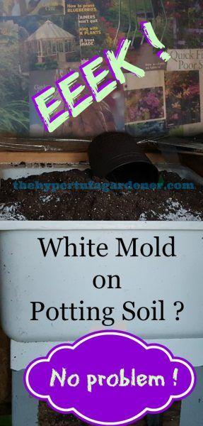 White Mold On My Potting Soil Potting Soil Garden Soil Plants