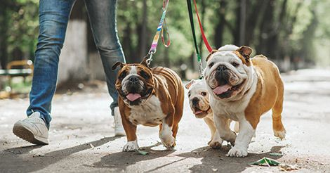5 Best Medium Sized Dog Breeds For Apartments Apartmentliving