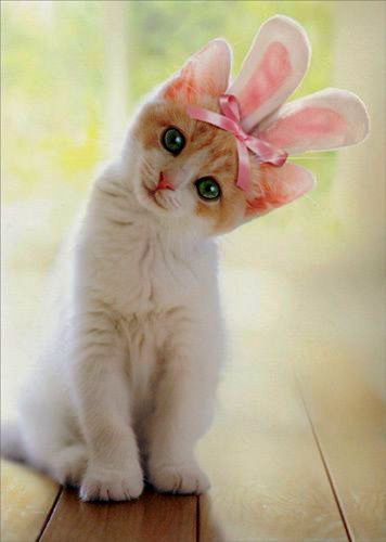 Cute Kittens And Puppies For Sale On How To Draw Really Easy Cute Animals Cute Baby Zoo Animals Videos Cute Cats And Kittens Baby Cats Cute Cats
