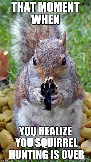 Funny Squirrels Squirrel Caption Fun Soumo Eu Squirrel Memes Squirrel Funny Cute Animal Memes