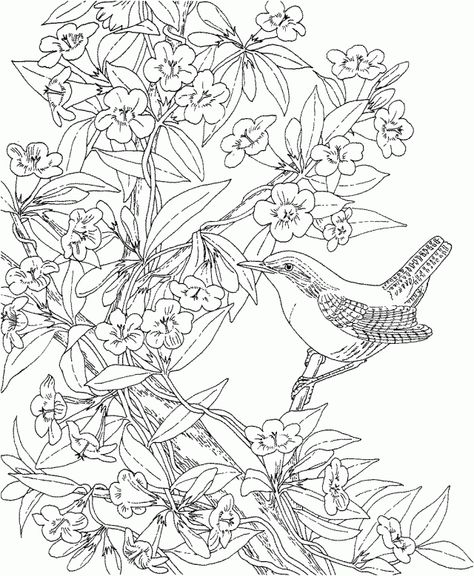 29a3bd39f8d8cbe185d8b22d47a4aefa free printable coloring pages adult coloring