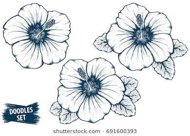 Hibiscus Flower Sketch Tropical Plant Doodle Floral Scrawl Scribble Vector Jungle Nature Hibiscus P Hibiscus Flower Drawing Flower Drawing Flower Sketches