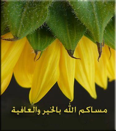 مساكم الله بالخير Cute Quotes Attitude Of Gratitude Plants