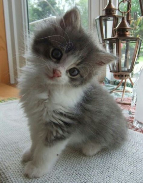Awe Looks Like A Baby Char Char Kittens Cutest Pretty Cats Cute Cats