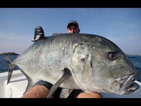 Look 515 Pound Halibut May Be World Record Sea Fishing Fish Halibut