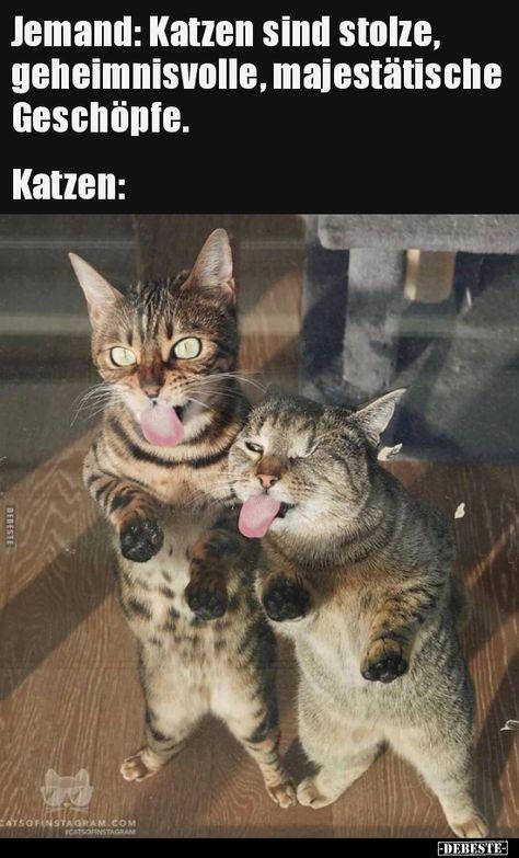 Jemand Katzen Sind Stolze Geheimnisvolle Majestatische