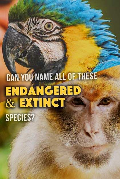Quiz: Can You Name All Of These Endangered and Extinct Species