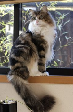 These special kittens will bring you joy. Cats are fascinating companions. #funnycats