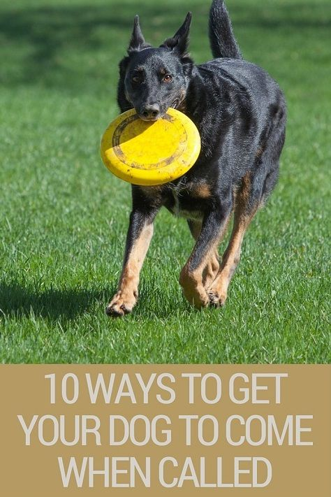 10 Ways To Get Your Dog To Come When Called That Mutt Dog