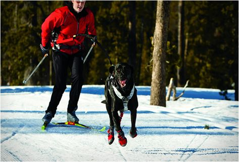 Omnijore Joring System By Ruff Wear Snow Dogs Dog Activities