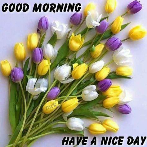 🙏శుభాకాంక్షలు - GOOD MORNING mrk HAVE A NICE DAY - ShareChat
