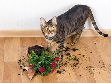 Why Do Cats Knock Things Over Cat Behavior Why Do Cats Purr Flower Pots