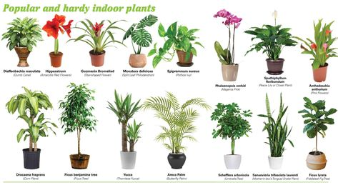The Growing Trend of Indoor Plants