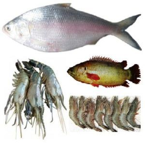 Fresh Fish Types Of Fish Fish Fresh Fish