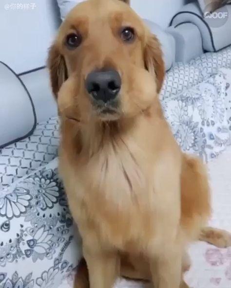 A dona desse cachorro, deixou duas bolinhas em…