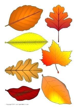 autumn leaf templates practical fall leaf autumn leaves templates