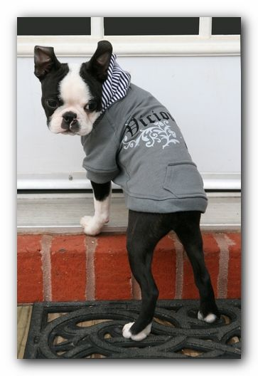 Love this dog hoodie #bostonterrier #dogclothes