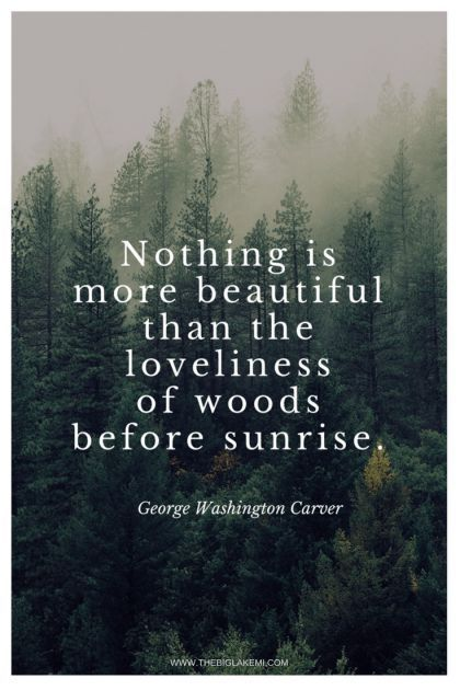 Quotes About Nature Thebiglakemi Nature Naturequotes Relationshipquotes Nature Quotes Into The Woods Quotes Outdoor Quotes