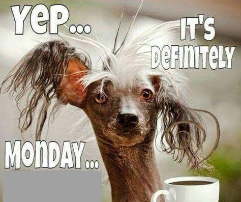 Pin On Monday Memes